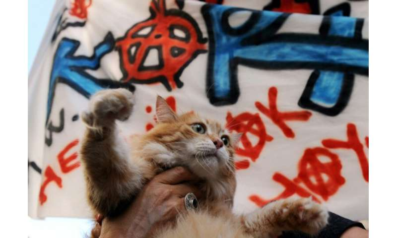 Istanbul officials are increasing efforts to ensure the good health of street animals