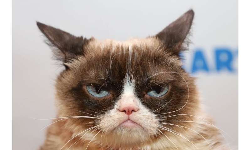 Is your cat in pain? Its facial expression could hold a clue