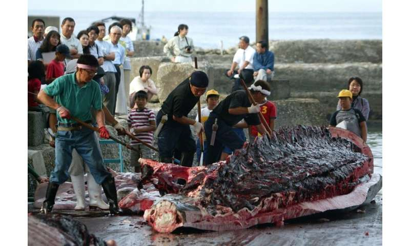 Japan sparked outrage when it decided to withdraw from the International Whaling Commission, saying it would return to commercia