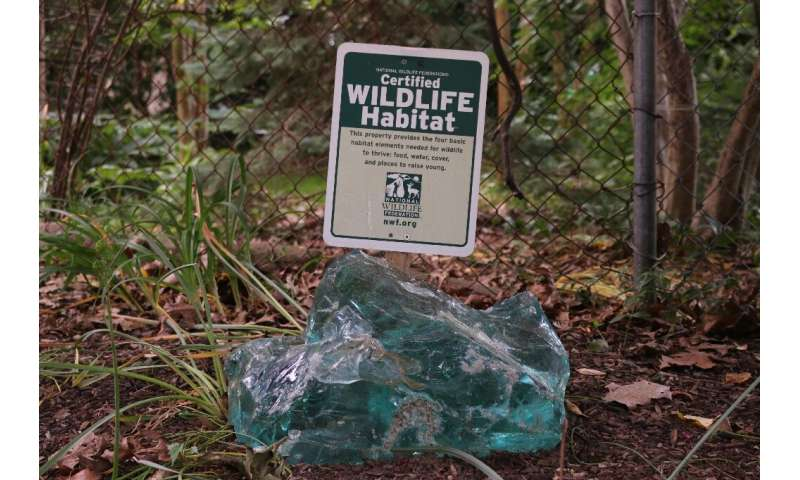 """Jim Nichols' rewilded garden shows off the """"Certified Wildlife Habitat"""" sign he earned from a local non-profit group"""