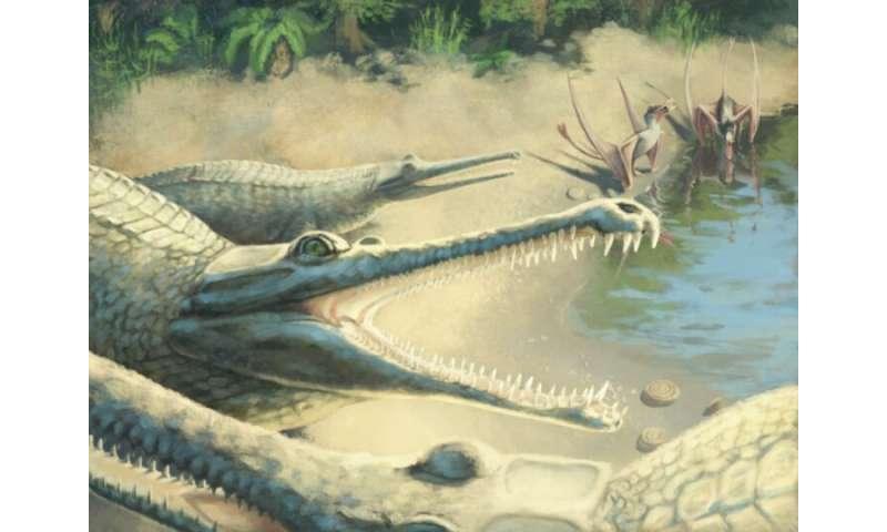تمساح ژوراسیک در مطالعه فسیل شناسایی شده است