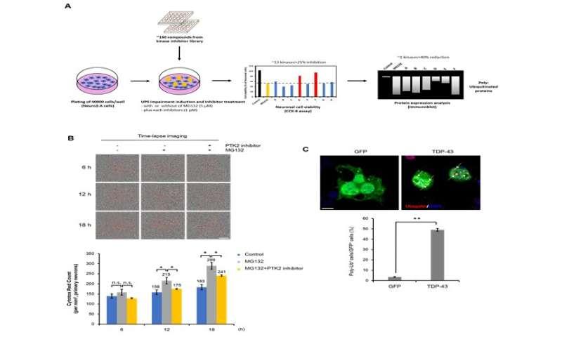 KBRI team reduces neurodegeneration associated with dementia in animal models