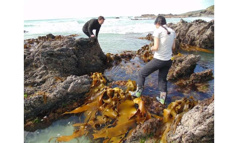 Kelp DNA records destructive power of ancient earthquake