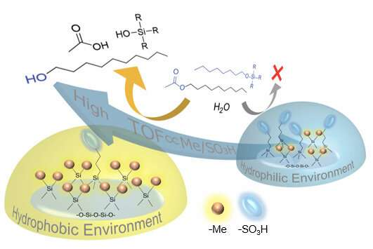 Key evidence associating hydrophobicity with effective acid catalysis