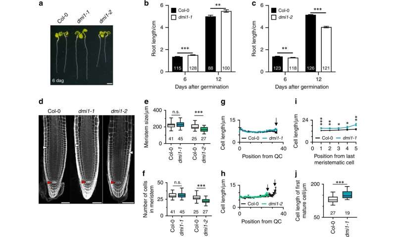 Key role for calcium release in root development