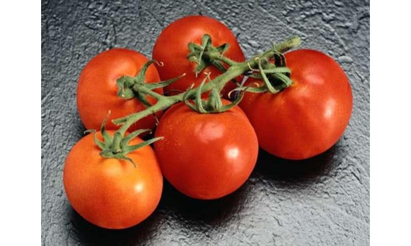 Kitchen essentials: mastering fresh tomato sauce