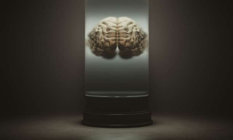 Lab-grown mini brains: we can't dismiss the possibility that they could one day outsmart us