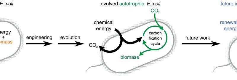 Laboratory-evolved bacteria switch to consuming CO2 for growth