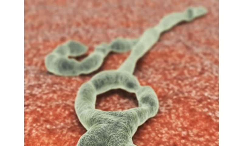 Lab tests show experimental ebola treatments effective