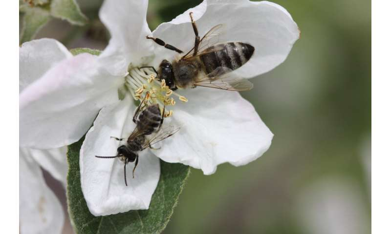Lack of crop diversity and increasing dependence on pollinators may threaten food security