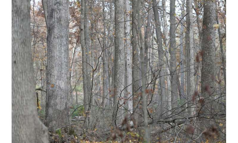 Large-scale forest carbon sequestration could cause food prices to skyrocket