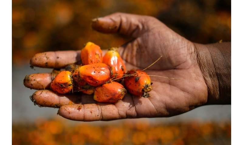 Last year Nestle's sustainable palm oil use reached 56 percent in Europe but in China, where there is less consumer pressure, th