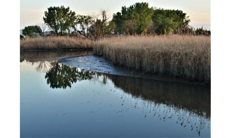 'Legacy' mercury pollution still a problem in New Jersey meadowlands waters