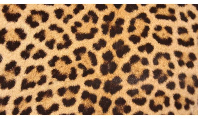 leopards' spots