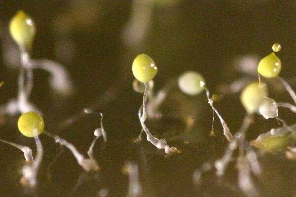 Life-changing magic of tidying up: Complex structures' organization studied in slime mold