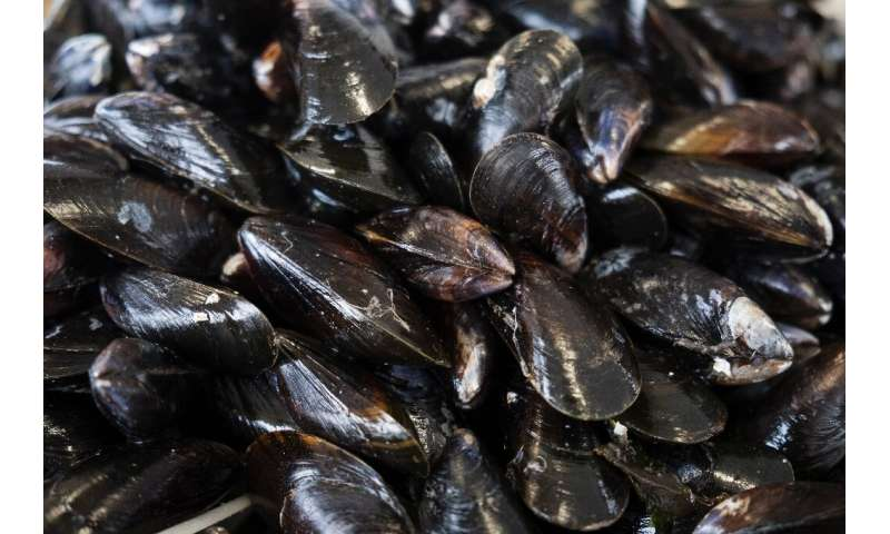 Like canaries in a coal mine, mussels have long been used as 'bio-indicators' of the health of the seas, lakes and rivers they i