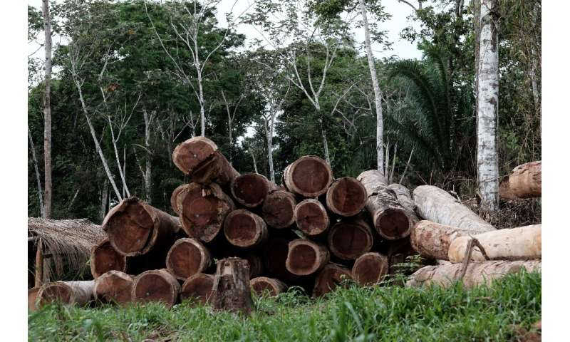 Logs in the forest in Xapuri, Acre State, in northwestern Brazil.