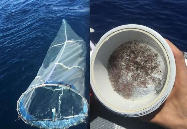 Longest-ever eDNA study offers important insights into ocean health