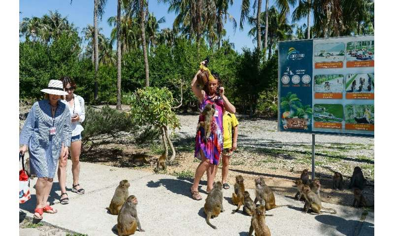 Macaques at Monkey Island in Nha Trang city, Vietnam, are known for snatching bags of crisps, water bottles, cookies and cracker