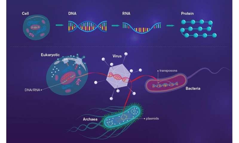 Major class of viruses reveals complex origins