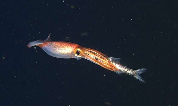 Making the case for managing the ocean's twilight zone