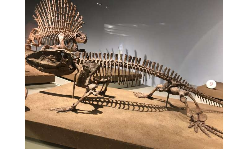 Mammals' complex spines are linked to high metabolisms; we're learning how they evolved