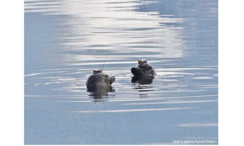 Mapping Oregon coast harbor seal movements using wearable devices
