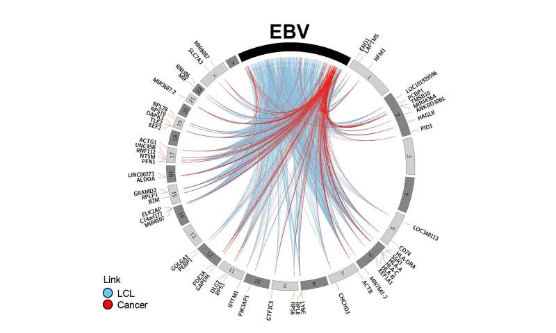 Map showing gene interactions could lead to new cancer therapies