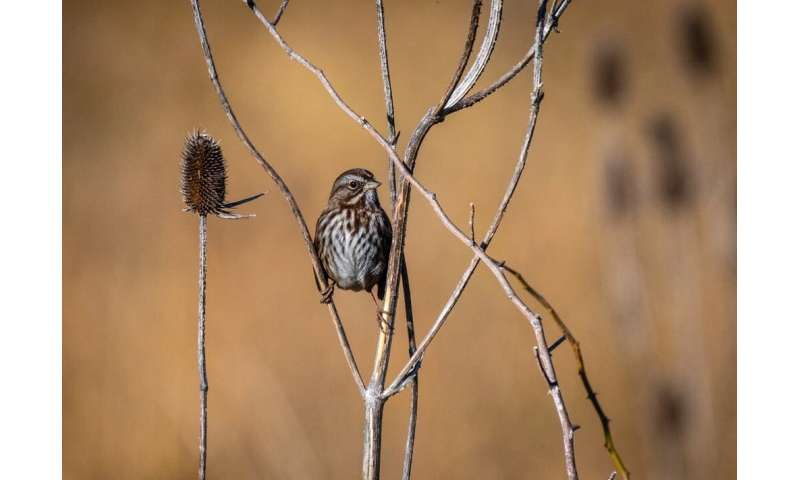 Margaret Morse Nice thought like a song sparrow and changed how scientists understand animal behavior