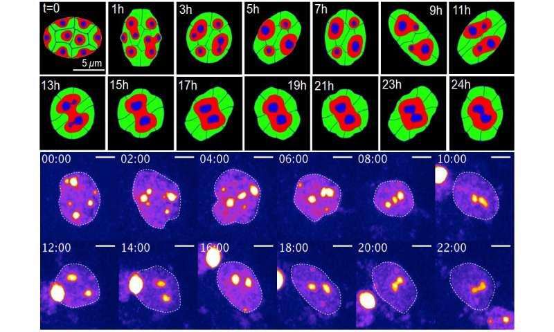 Math shows why animals see at night