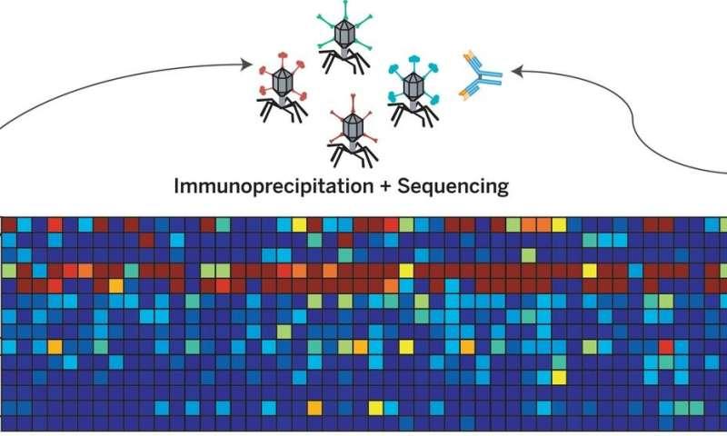 Measles virus infection destroys immune system memory