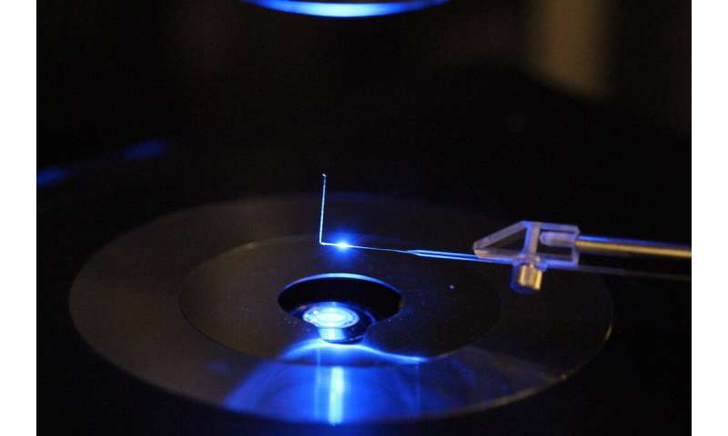 Measuring forces of living cells and microorganisms