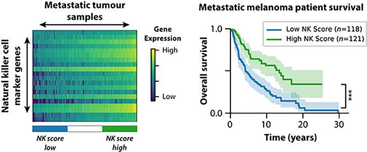 Melanoma patient outcomes predicted by computational biology