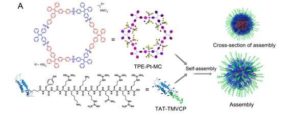 Membrane intercalation enhances photodynamic bacteria inactivation