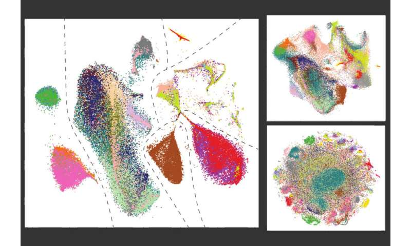 Merging cell datasets, panorama style