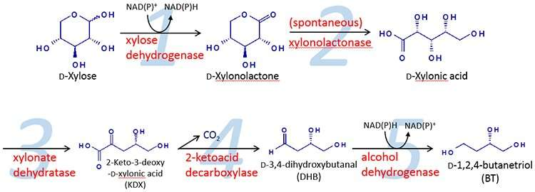 Metabolic engineering method succeeds in producing 1,2,4-butanetriol sustainably from biomass