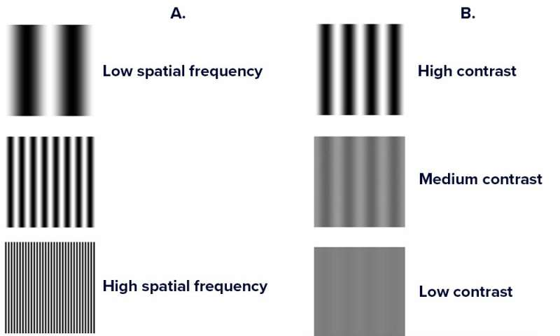 Microscopic eye movements affect how we see contrast