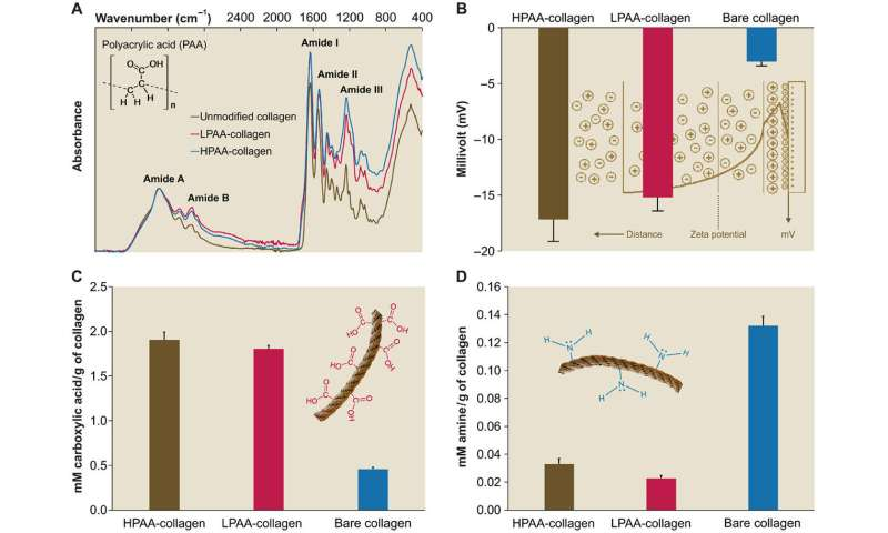 Modeling biomimetic collagen-ligand interactions to understand intrafibrillar mineralization