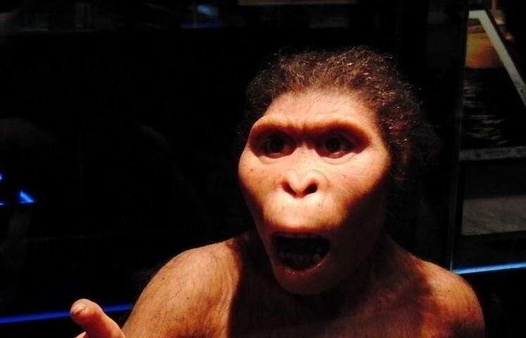 **Modern apes smarter than pre-humans