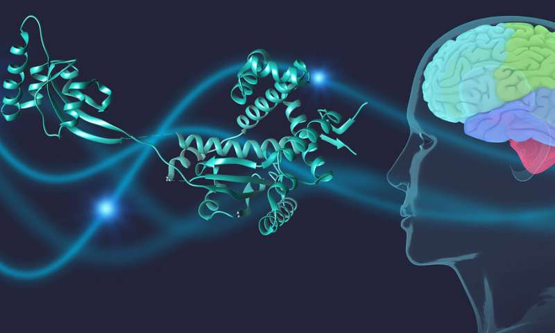 Molecular bodyguards against Parkinson's disease