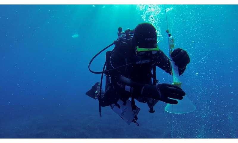 Monitoring CO2 leakage sites on the ocean floor