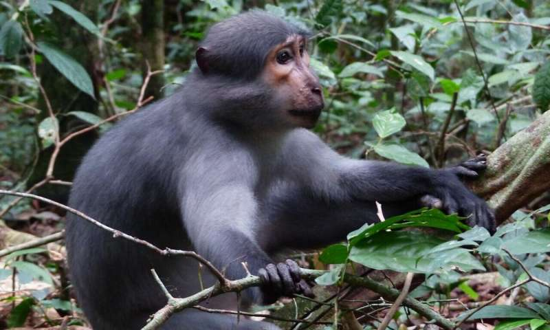 Monkeys inform group members about threats -- following principles of cooperation