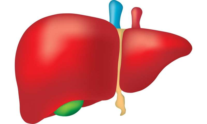 More donor livers could be used for transplantation, thanks to exciting new development