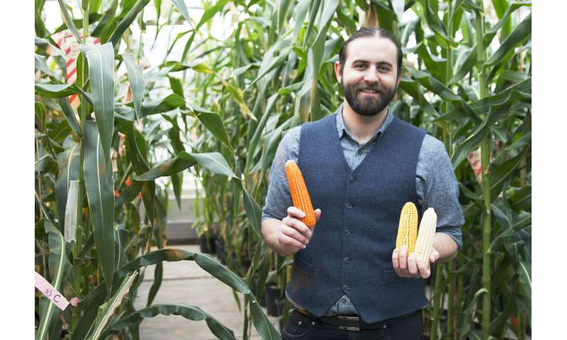 More nutritious, natural flavor, non-GMO 'orange corn' launches in US markets
