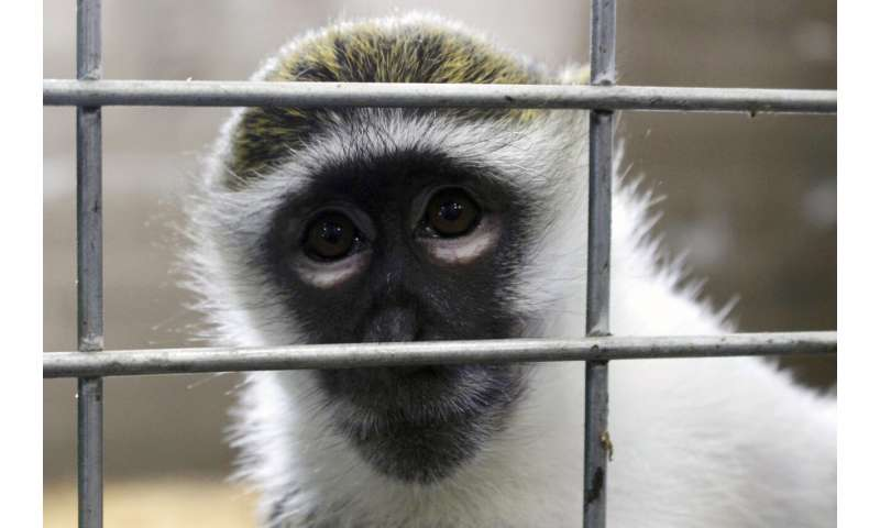 More research monkeys retire when studies finish