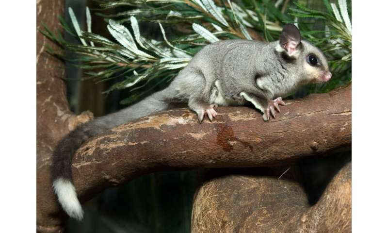 More safe havens for native plants and animals needed in NSW's west