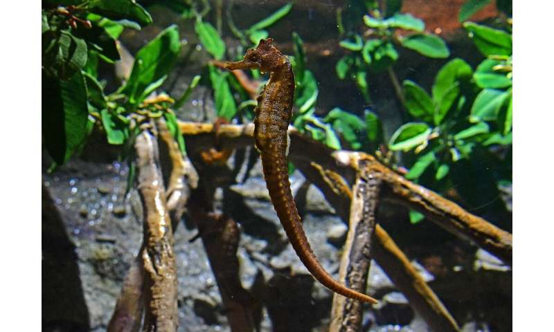 More tropical fish such as seahorse are appearing in warming European waters