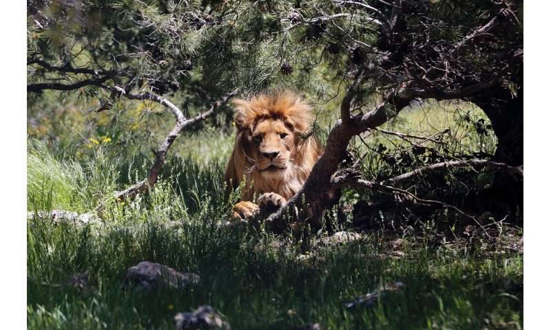 Most of the animals at the Jordanian wildlife reserve were rescued from Syria