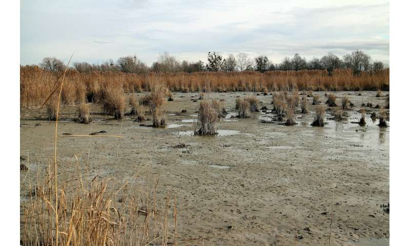 muddy marshes