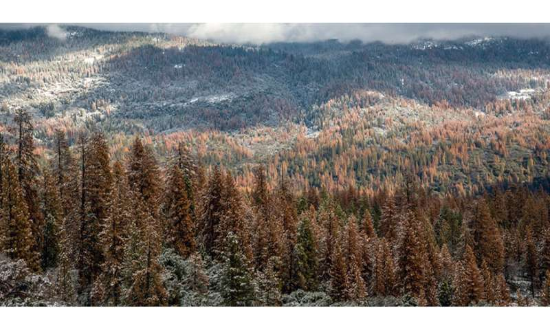 **Multi-year drought caused massive forest die-off in Sierra Nevada